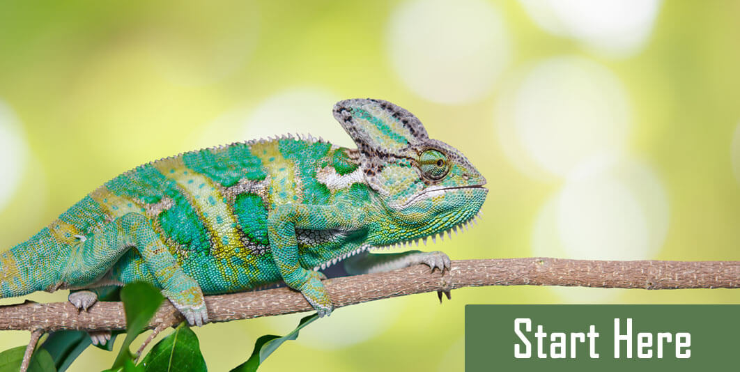Learn More About Everything Reptiles