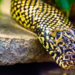 Speckled Eastern King Snake