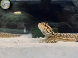 Lizard Enclosure With Sand