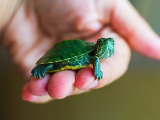 Pet Turtle Names