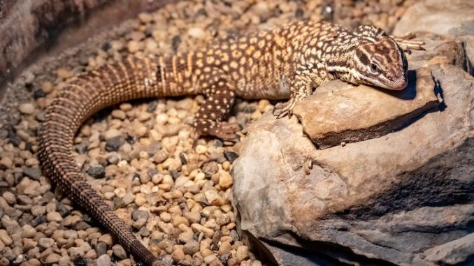 Ackie Monitor