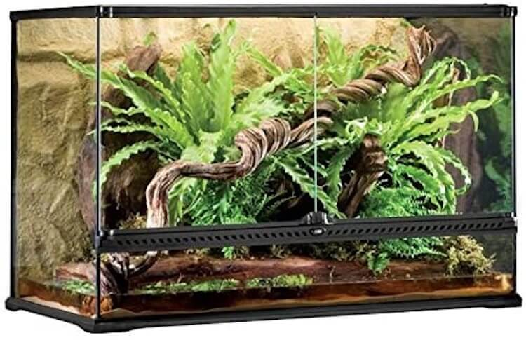 Exo Terra Large 65-Gallon Bearded Dragon Tank