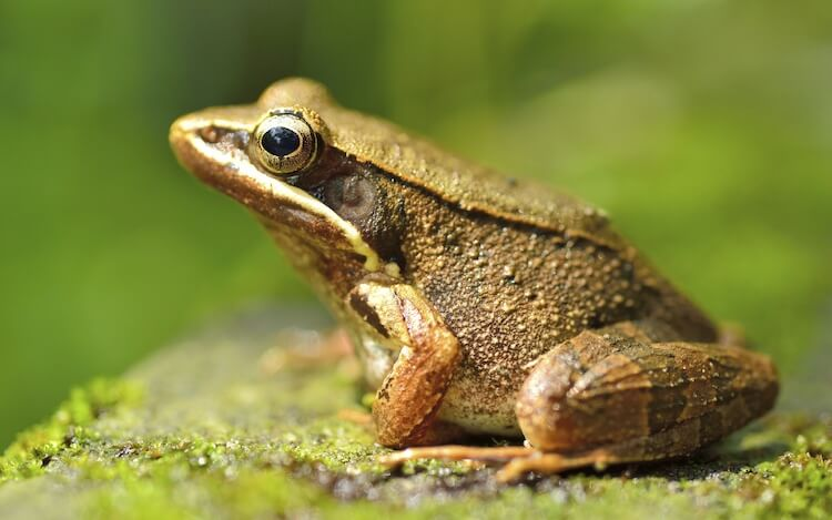 Green frog sitting on plant