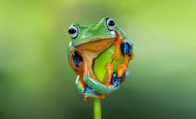 Tree frog clinging to a plant